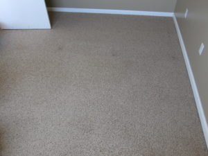 Cleaned by the Rug Doctor Renting out Rooms